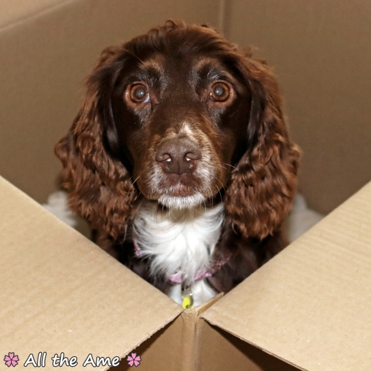 Doggo Unboxing- wm.jpg